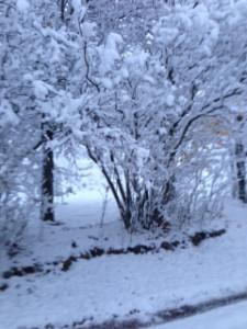 First Snow November 2015