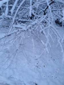 Snowstorm 1-22